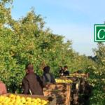 Production de pommes et poires en biodynamie : interview Les Côteaux Nantais
