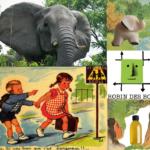 Remplacer l'ivoire, le blanc de baleine et emménager dans une zone non-toxique : interview de l'association Robin des bois