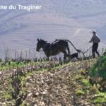 La biodynamie vue par un «Nord-Catalan» du Domaine du Traginer