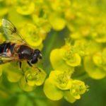 Comment prévenir la disparition des abeilles
