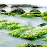 Comment produire du carburant biodiésel écologique