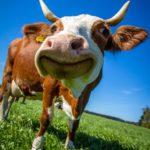 Le végétarisme : la solution ultime pour sauver le monde ?