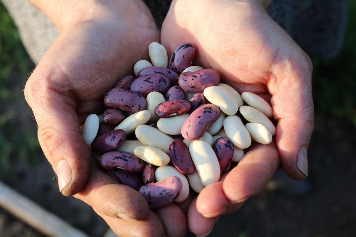 Légumineuses et oléagineux : bons pour la santé et pour la planète