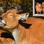 Empreinte carbone des viandes : comparaison